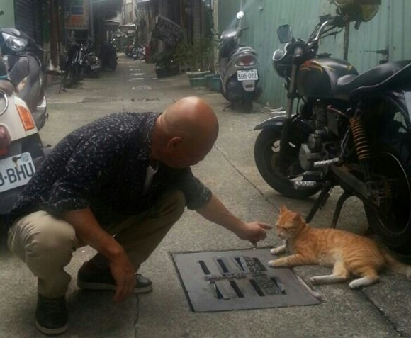台湾猫-3