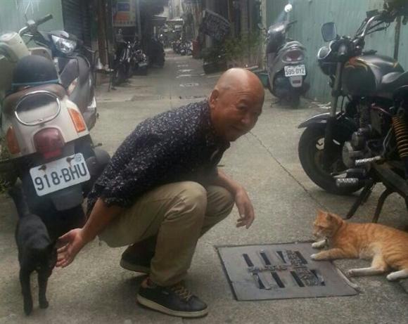 台湾猫-2