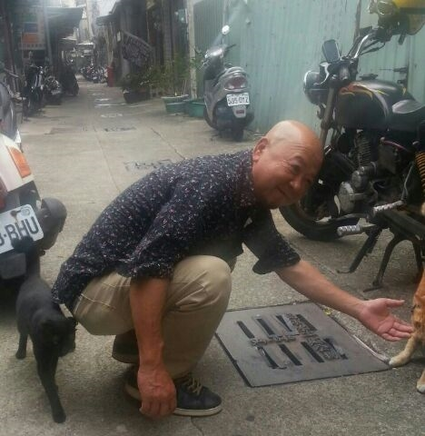 台湾猫-5
