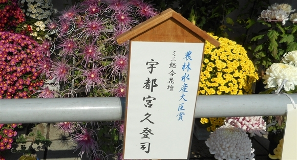菊花展-3