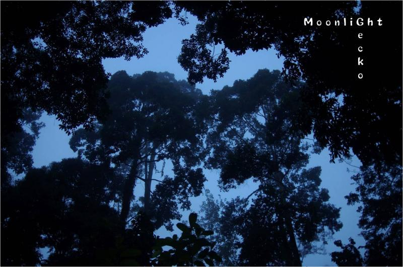 朝のジャングル