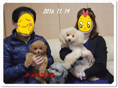 シェリちゃんのお迎え (6) - コピー