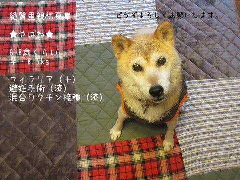 IMG_8551-1.jpg