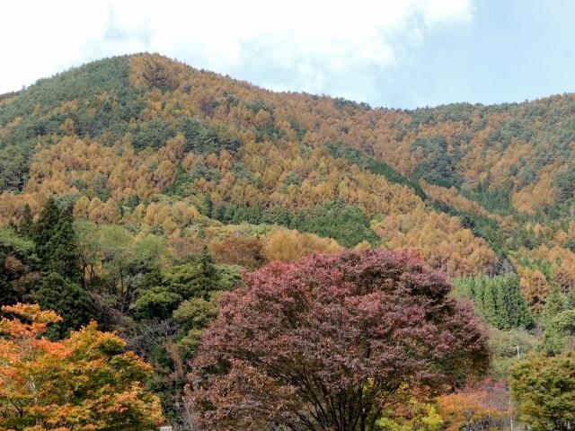 N8516紅葉する山