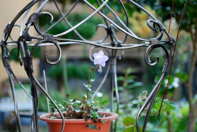9191一輪の花
