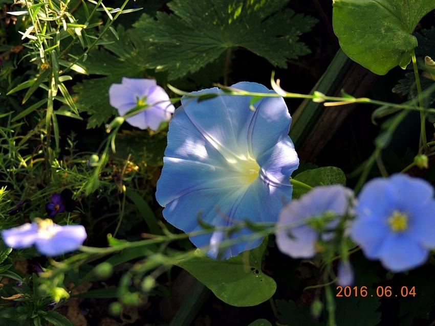 002_20160605181819123.jpg