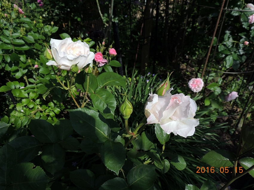 058_2016051518183680b.jpg