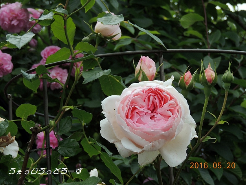 079_20160520152700b9b.jpg