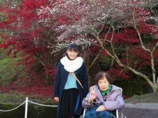 11/25四季桜4