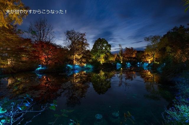 20161126モネの庭ライトアップ3