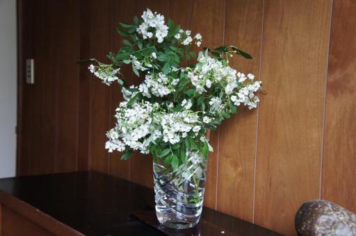白いバラ1