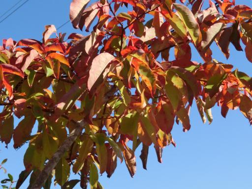 スズランの木2