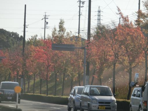 街路樹の紅葉1