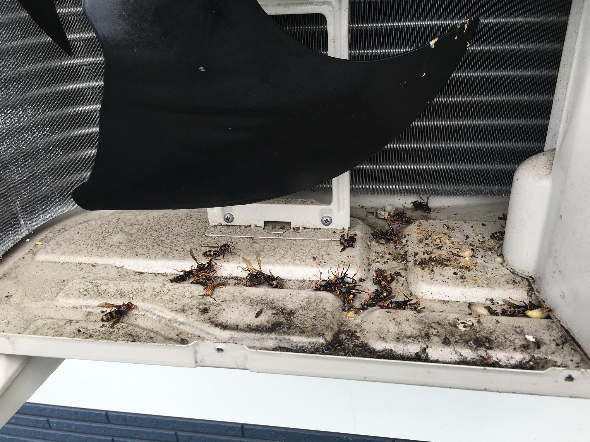 室外 機 蜂の巣