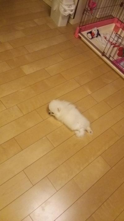 米太郎 床暖房