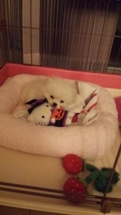 米太郎 眠い