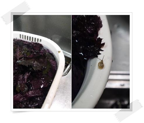 赤紫蘇もみ2016-5