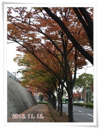 紅葉散歩2016-1