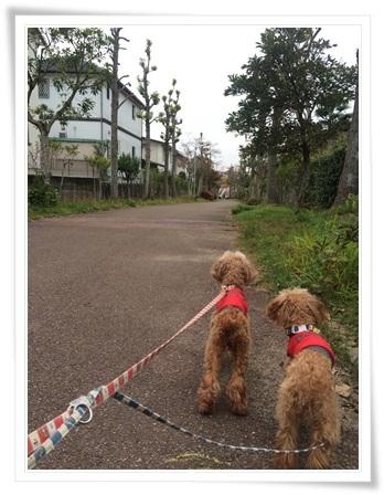 紅葉散歩2016-2