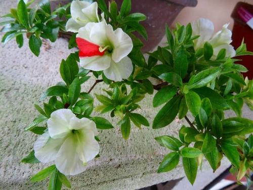 緑花の泉DSC01539
