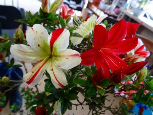 花綴DSC01623