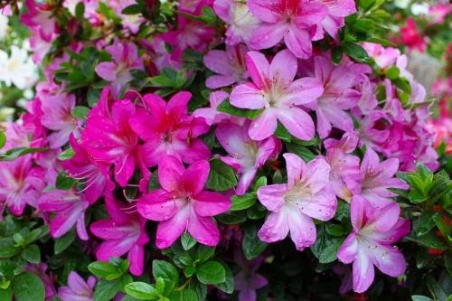 春苑IMG_3476