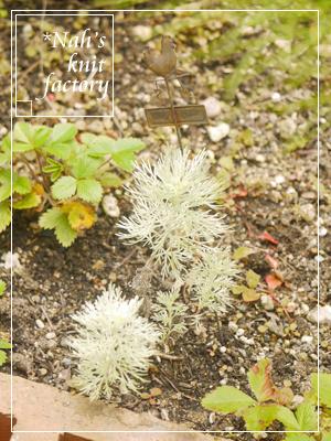 garden2016-51.jpg