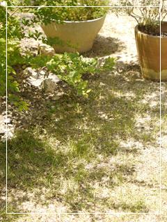garden2016-58.jpg