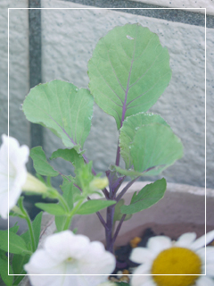 garden2016-59.jpg