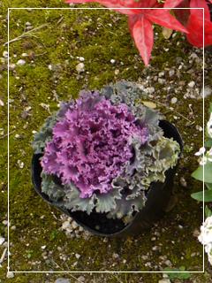 garden2016-61.jpg