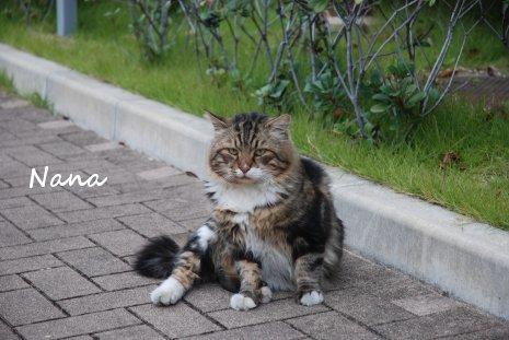 cat1-1.jpg