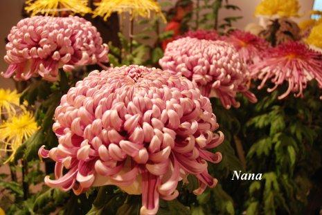 flower1-1_20161101174932e5a.jpg