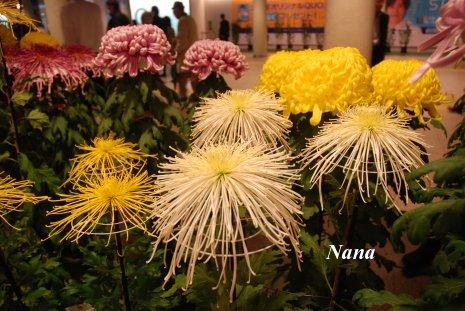 flower1-2_201611011749331ac.jpg
