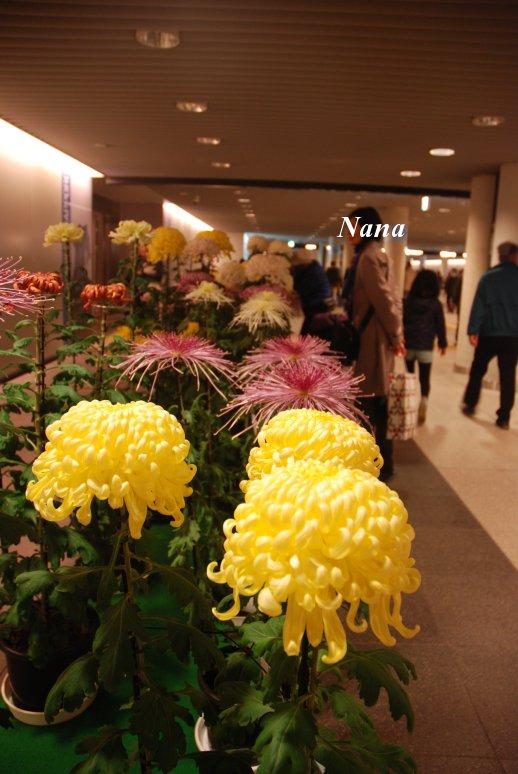 flower1-3_20161101174935428.jpg