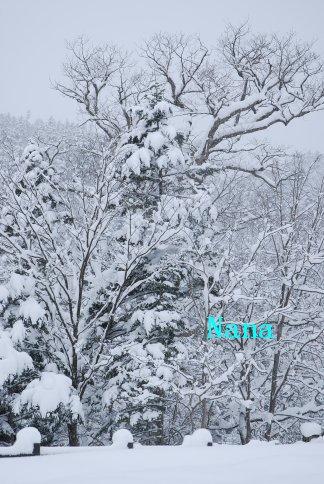 white1-21.jpg