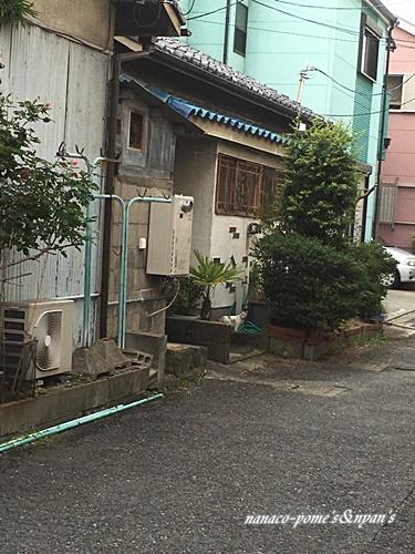 moblog_f26da6ef.jpg