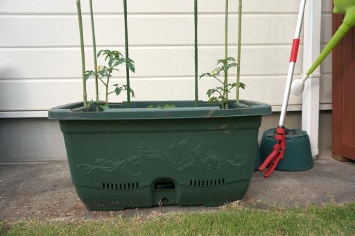 トマト栽培 プランター