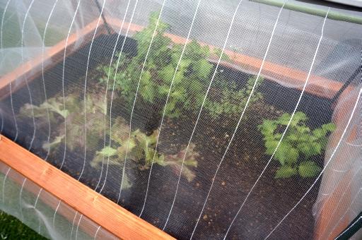 庭 畑 害虫対策