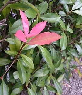秋が来た用2