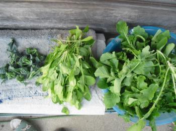 4-20収穫