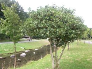 RIMG2002.jpg