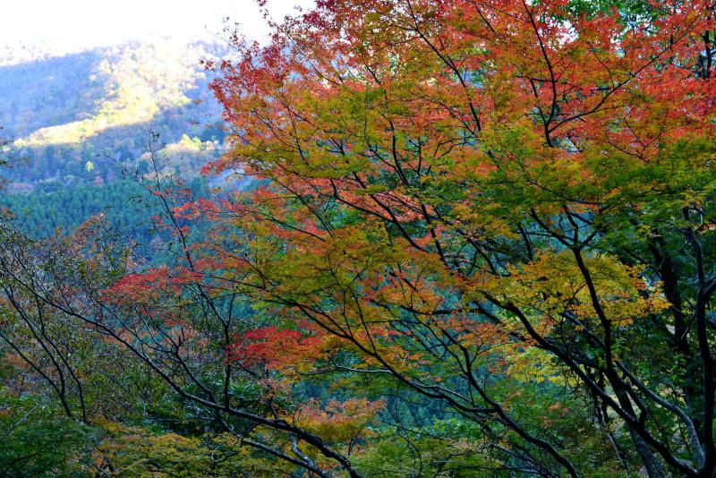 「紅葉始まる山麓」