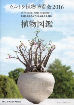 植物8-7-2016_001