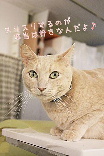 小枝20161022-04