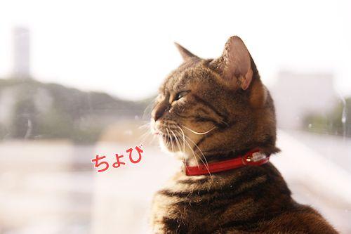 いちご先輩20161029-02