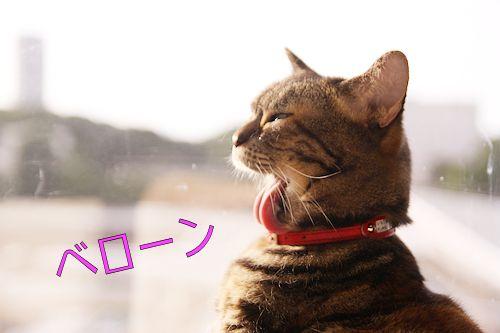 いちご先輩20161029-04