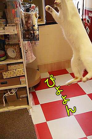 松子20161120-02