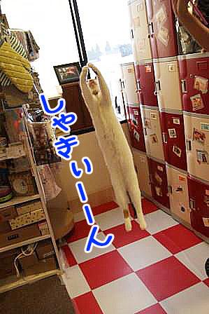 松子20161120-08