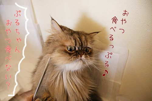 ぷるぷる20161203-01