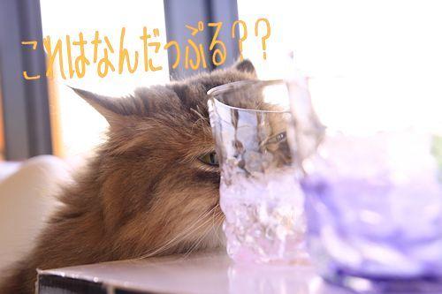 ぷるぷる20161219-01